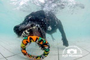 Beim Hundeschwimmen wurden die Vierbeiner professionell abgelichtet!