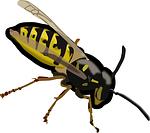 wasp-152849_150